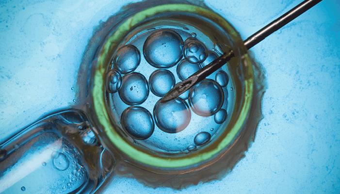 Fertilización in vitro